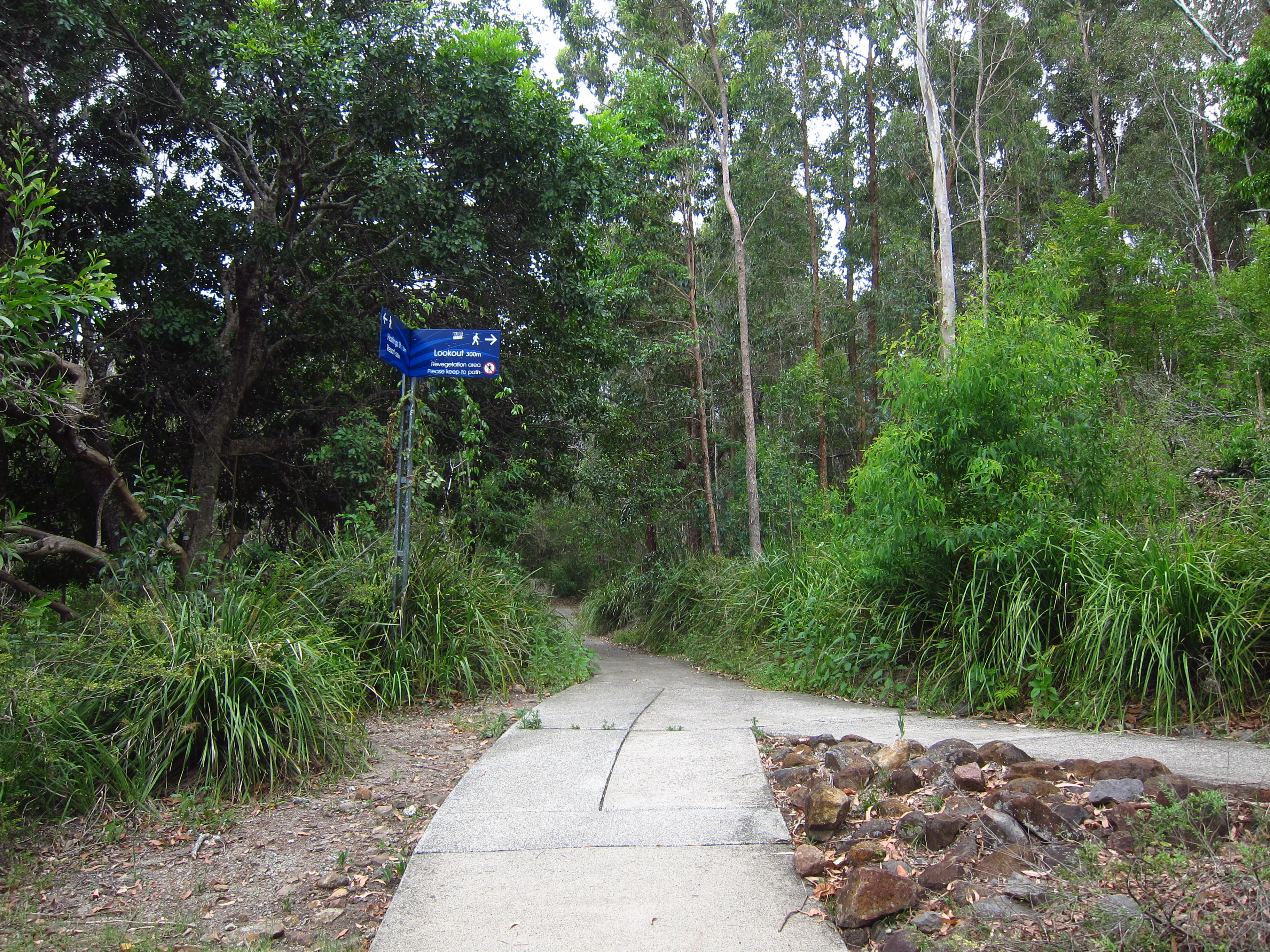 34. Trail to Laguna Lookout