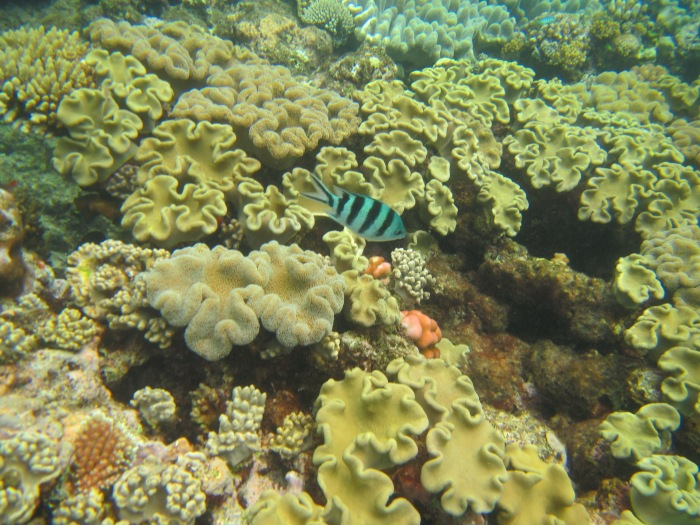 20. Sexon Reef with fish