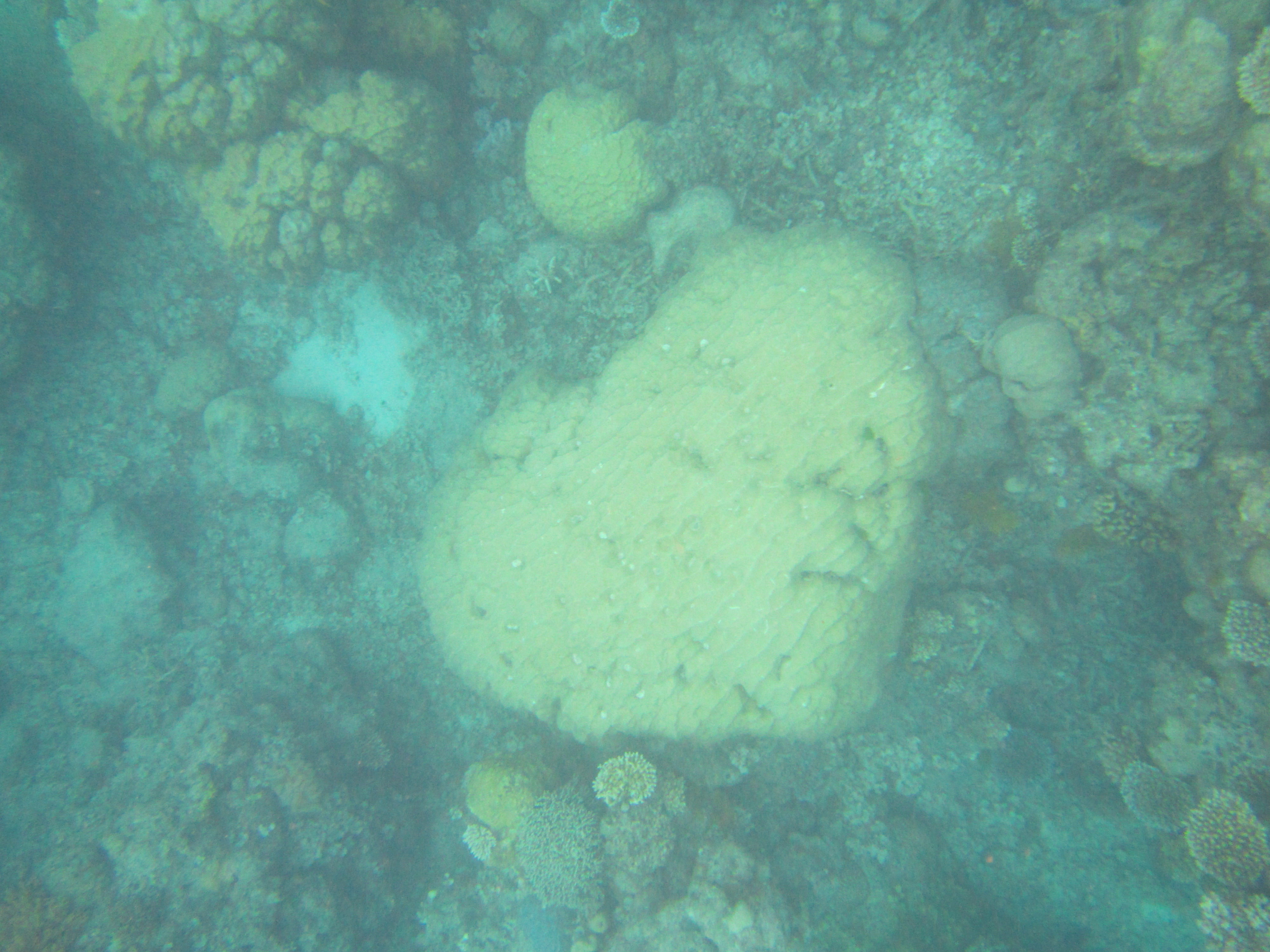 51. Heart-shaped reef
